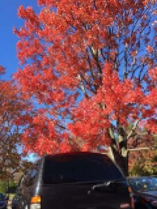 National Arboretum Red Tree